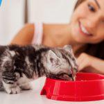 Tips dari Meowholic Agar Tidak Boros Saat Memelihara Kucing